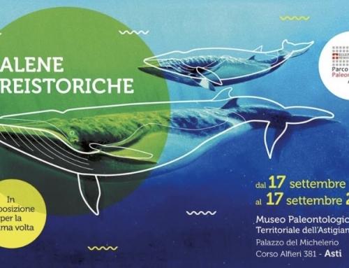 Balene preistoriche al Museo Paleontologico di Asti
